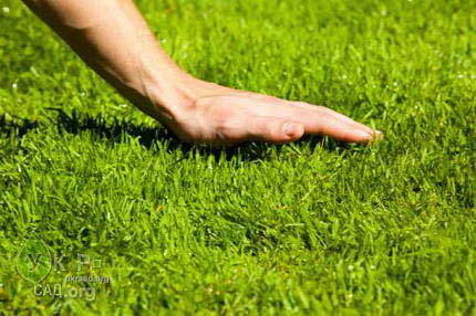Газон, посев, уход, семена, рулонный газон