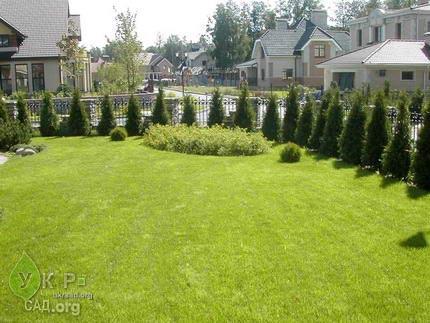 Живые изгороди, зеленые стены