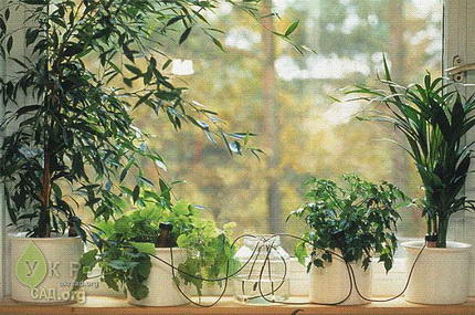 Автоматическая система полива комнатных растений
