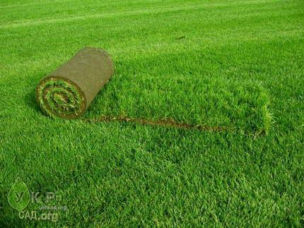 Вырастить рулонный газон