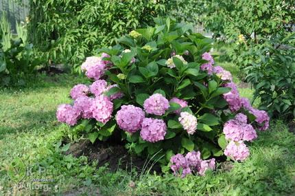 Декоративные растения для озеленения